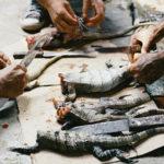 Los traficantes y pandilleros no son admitidos en los refugios de migrantes y, a menudo tienen que valerse por sí mismos para la comida. Estas iguanas salvajes fueron capturadas con una catapulta y se hirvieron para hacer sopa. Crédito de imagen: Jason De León.