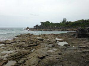 Las conchas fosilizadas de caracoles de mar de la costa meridional de Bermudas fueron utilizadas en un estudio llevado a cabo por la Universidad de Michigan sobre las temperaturas oceánicas pasadas. Crédito de imagen: Ian Winkelstern