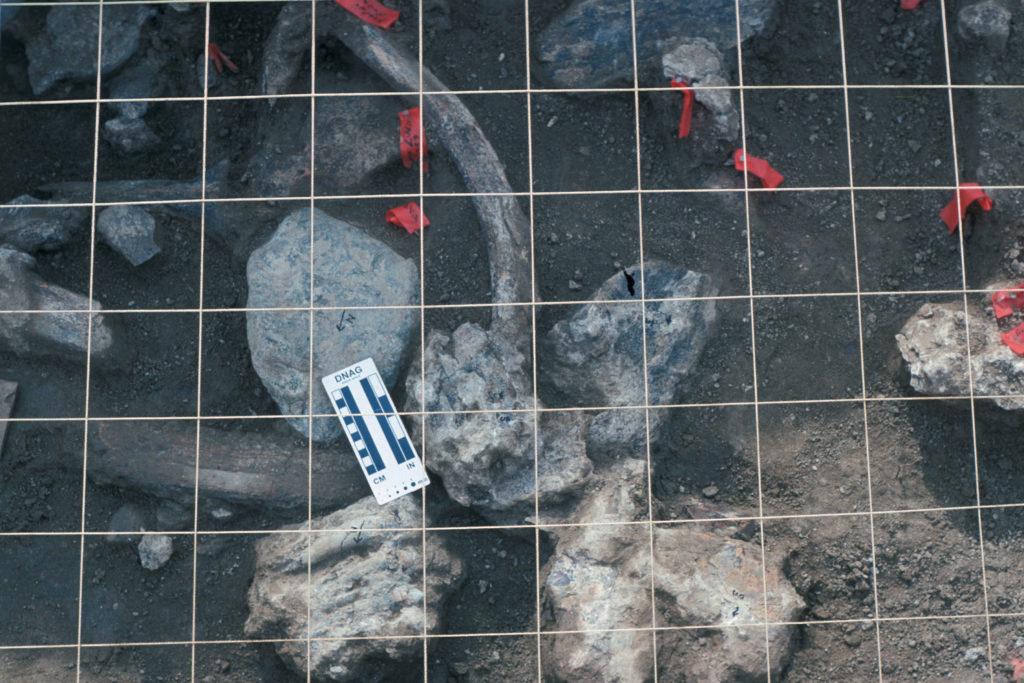Una vista de la unidad E-3 que contiene varios restos fósiles en el sitio de Cerutti. Museo de Historia Natural de San Diego, 25 de enero, 1993