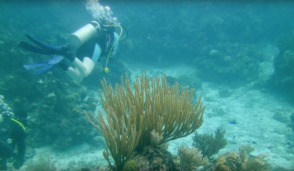 Científicos bucean en el Parque Nacional Península Guanahacabibes en Cuba.