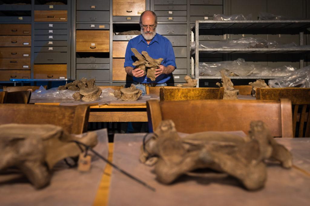 Dan Fischer estudia restos de mamut para nueva exposición.