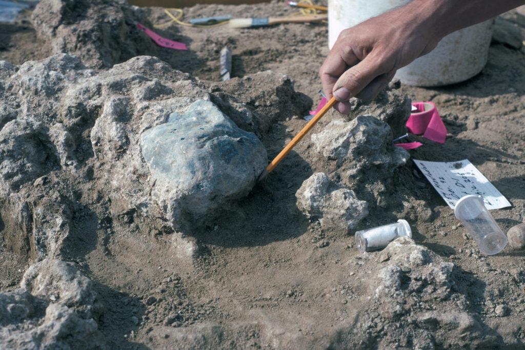 Paleontólogo del Museo de Historia Natural de San Diego Steve Walsh apuntando a un yunque de roca que se cementa en caliche, un depósito mineral de grava, arena y nitratos. Museo de Historia Natural de San Diego, 31 de diciembre, 1992