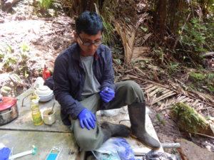 Juan Carlos Cusi del Museo de Historia Natural de la Universidad Nacional Mayor de San Marcos en Lima, Perú, recoge muestras de anfibios en el Bosque de Protección Pui Pui en Perú. Cusi es uno de los cuatro miembros del equipo de investigación que ha descrito cinco nuevas especies de ranas de la zona este año.