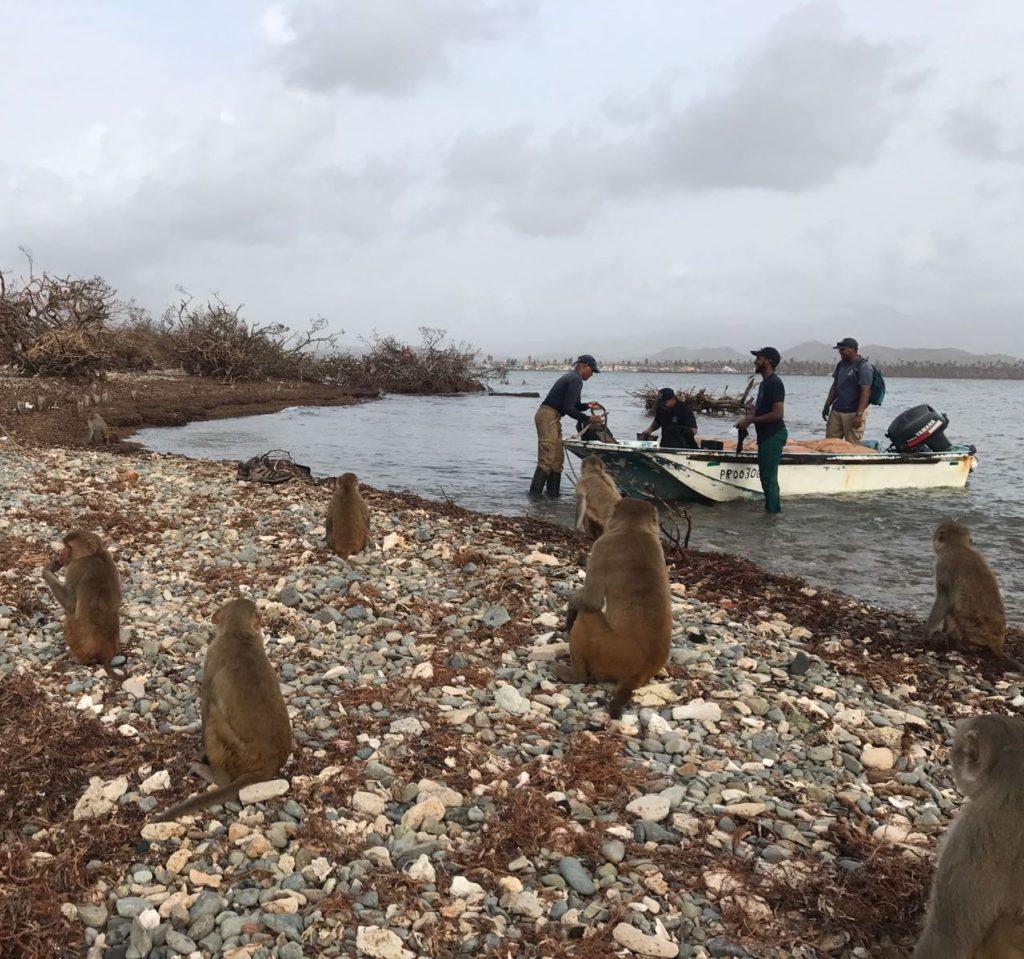 El personal visita Cayo Santiago para evaluar el daño después de la tormenta. Crédito de foto: Crédito de foto: Bonn Aure.
