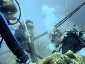 Miembros del equipo extraen núcleo de un coral Jiménez y sus colegas estudiaron muestras extraídas del coral en la parte norte deshabitada del Parque Nacional de las Islas Galápagos.
