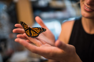 . La investigadora Leslie Decker con una mariposa monarca en un laboratorio de la Universidad de Michigan. Foto de Austin Thomason / Michigan Photography.