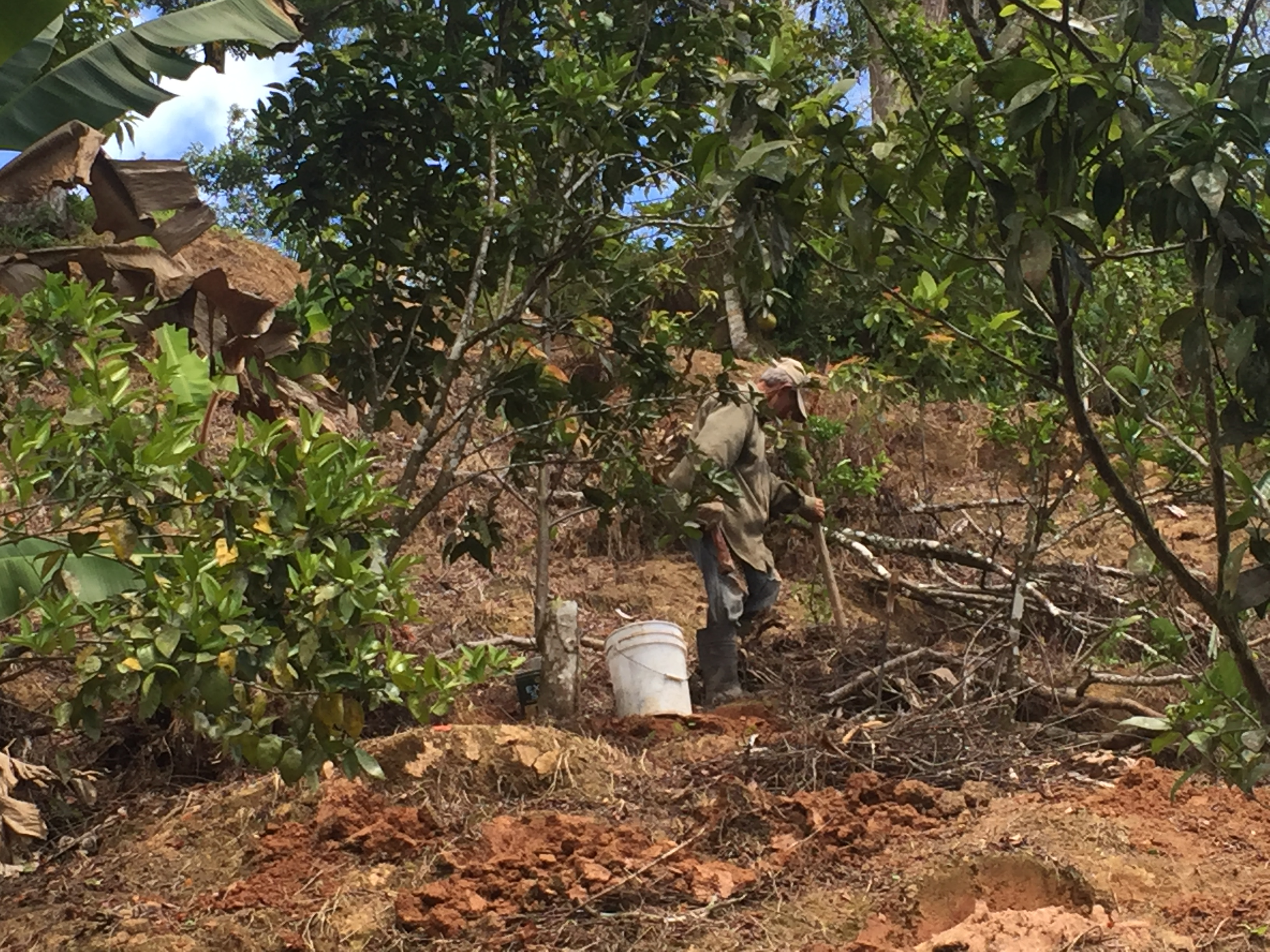 Don Julio, un agricultor de 75 años, está limpiando escombros y malezas para reiniciar su granja, donde cultivaba café, naranjas, piñas y plátanos antes de que el huracán María aniquilara las cosechas. Crédito de foto: Nardy Baeza Bickel.