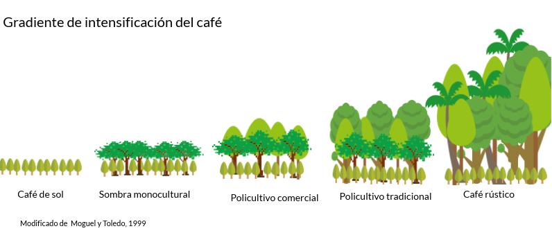 gradiente de intensificación del café