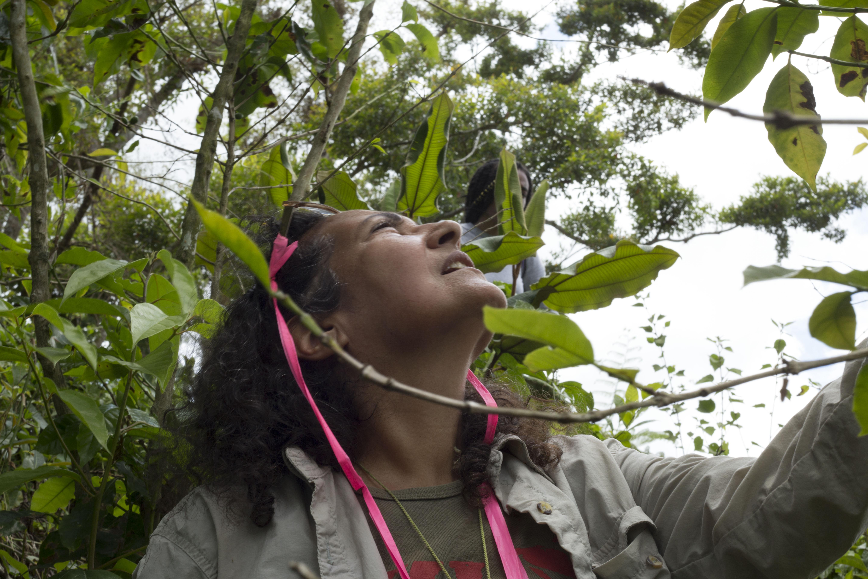 Ivette Perfecto, profesora de la Escuela de Medio Ambiente y Sostenibilidad de U-M, analiza el daño sufrido por una plantación de café en Utuado, Puerto Rico. Perfecto, quien es de Puerto Rico, lidera un proyecto para aumentar la resiliencia energética y agrícola de la región a través del uso de gasificación y su subproducto, el biochar. Crédito de la foto: Levi Stroud.