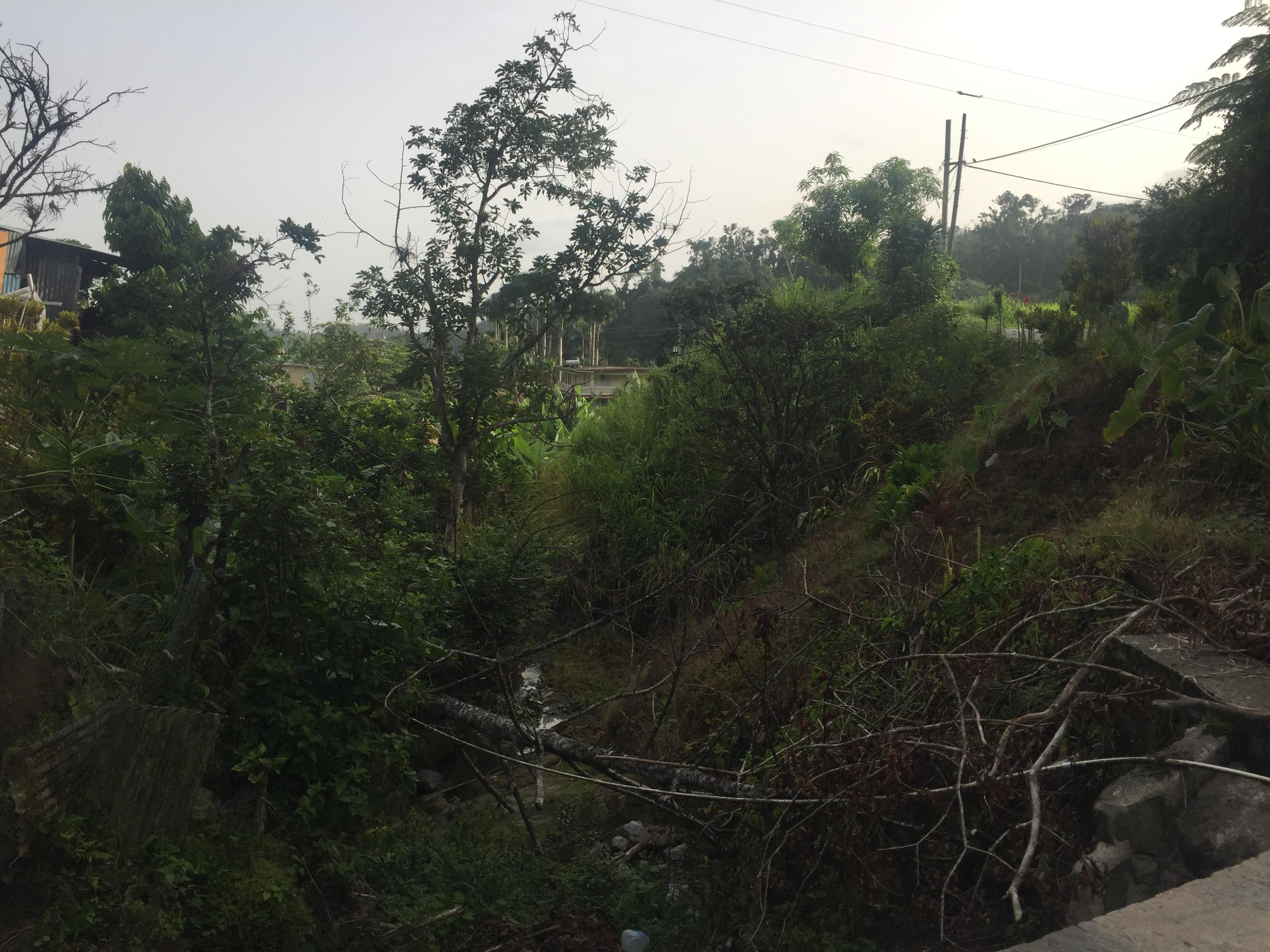 Si bien las vistas desde la carretera de Utuado a Adjuntas son impresionantes, los daños causados por los huracanes Irma y María aún son evidentes. Crédito de la foto: Nardy Baeza Bickel.