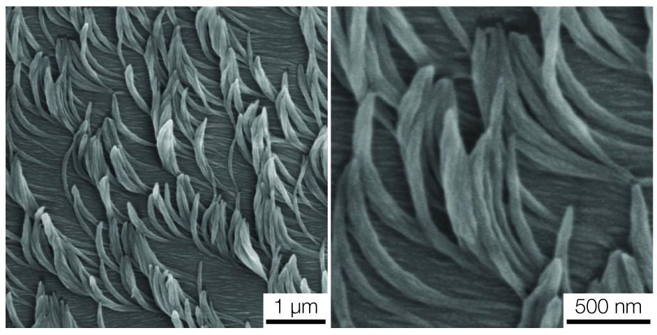Alfombra de nanofibras inspirada en la naturaleza podría dar lugar a nuevas superficies