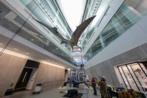 Pterosaurio gigante 'vuela' al Museo de Historia Natural de la UM