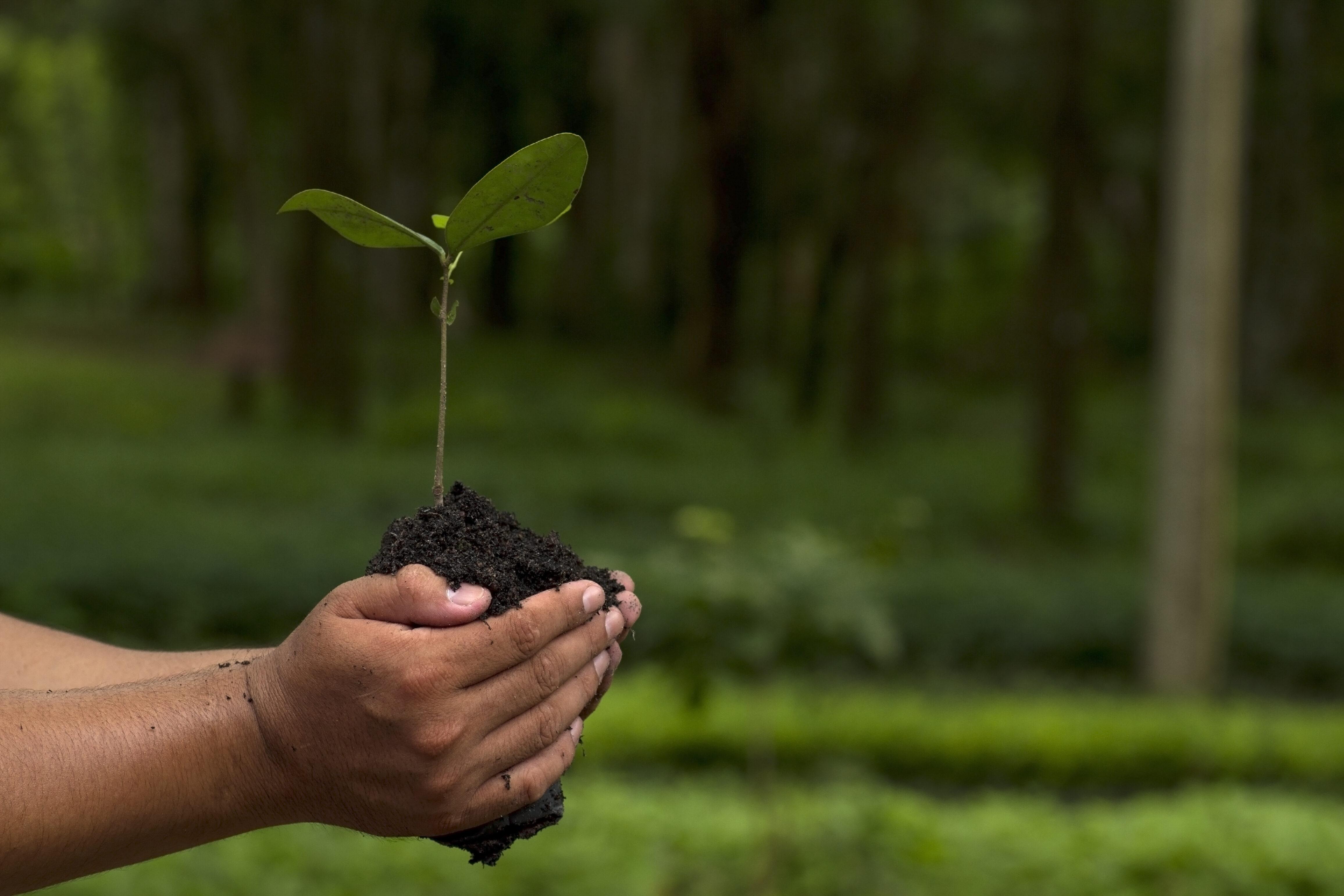Dos manos sostienen un árbol.
